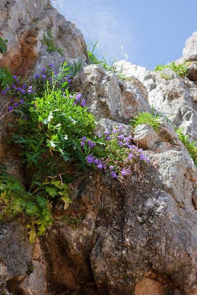 Greece-3-29-08-31004.jpg