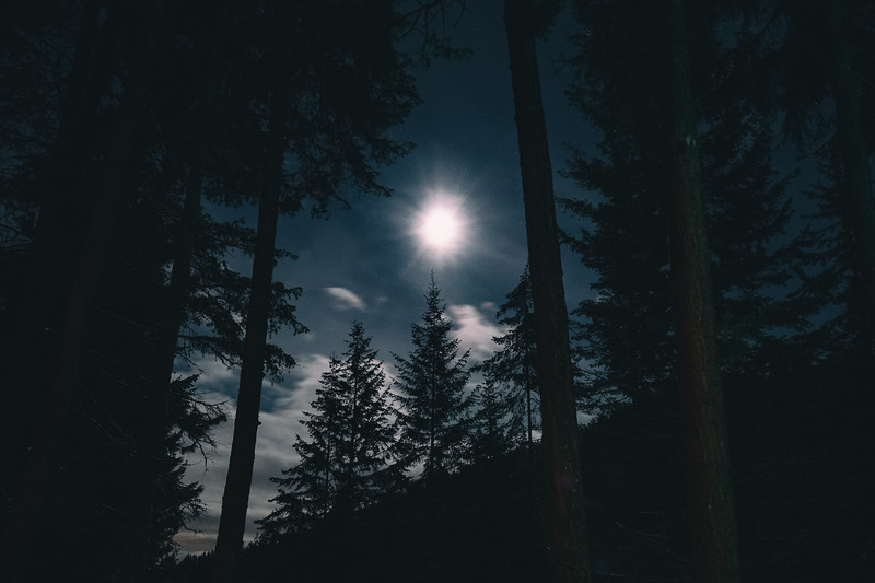 Full Moon through the Woods