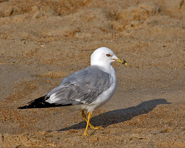 Travel - Duck 2010 - Gulls & Terns