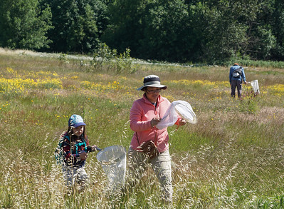 Bee Survey - June 9, 2019 at Whilamut Natural Area