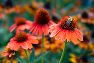 Missouri Botanical Garden 2020