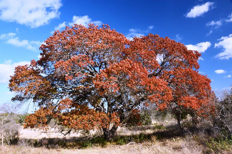 Autumn at the Eads Ranch - 033a.jpg