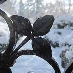 Winter Snow at Ashland Garden
