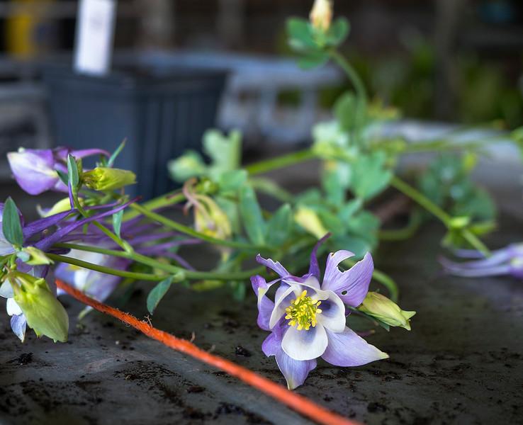 leftover flowers.jpg