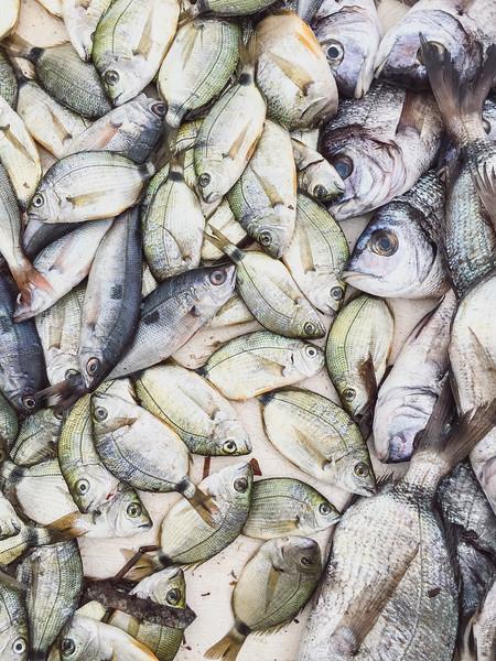 marseille fish market 10.jpg