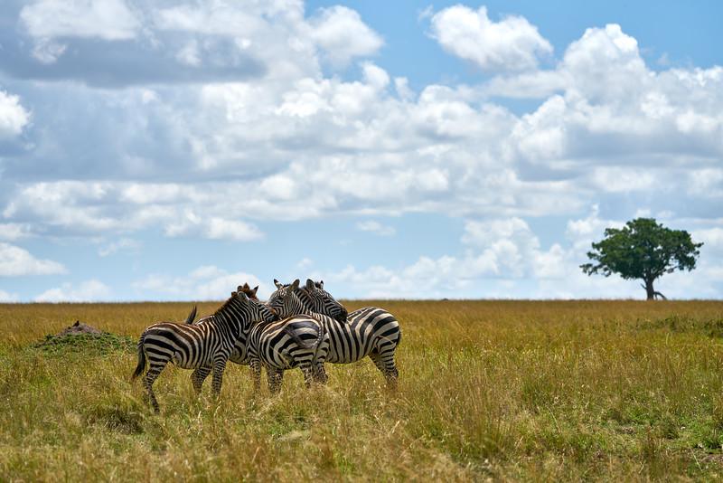 Maasai Mara_DSC08847.jpg