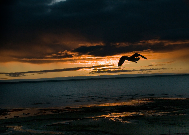 Sea Gulls in the sunset  - Copy.jpg