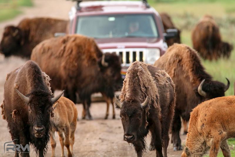 Wyoming Traffic Jam