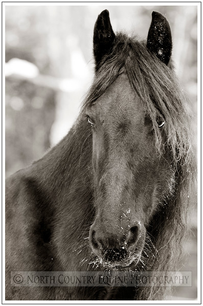 North Country Equine Photography