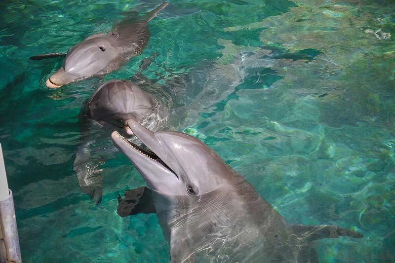 2019 August Dolphin Quest-104.jpg