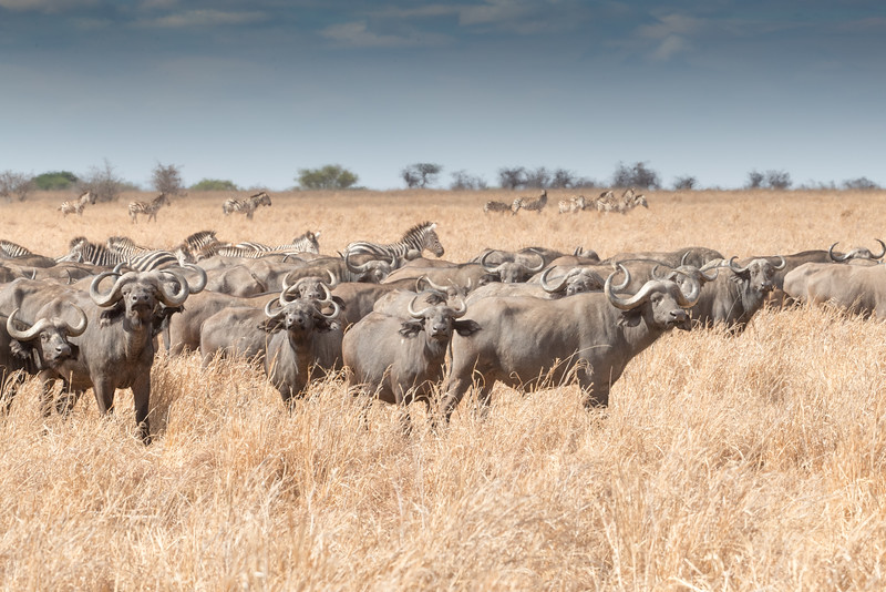 Africa - 102116 - 8194.jpg