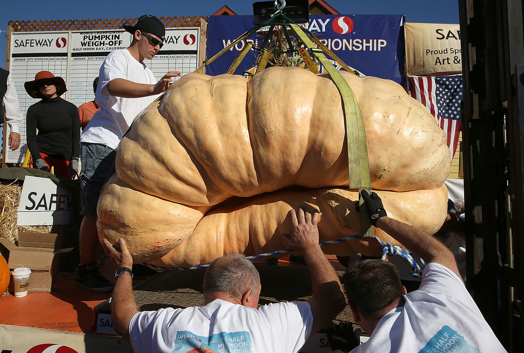 . Workers move a 1,985 pound pumpkin onto a scale during the 40th Annual Safeway World Championship Pumpkin Weigh-Off on October 14, 2013 in Half Moon Bay, California.   (Photo by Justin Sullivan/Getty Images)