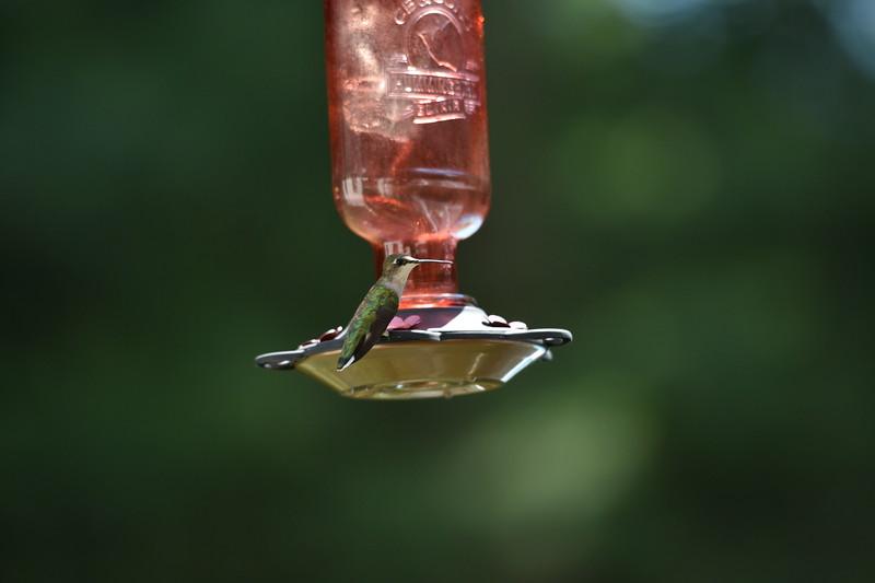 2019_07_01 H Birds (77).JPG