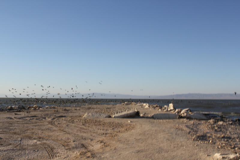 04 The Salton sea (2).JPG