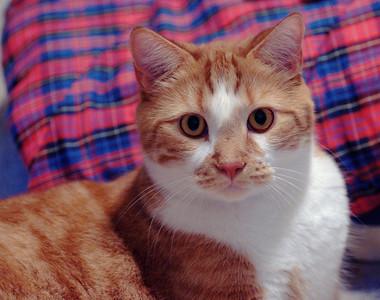 Assorted Kitties