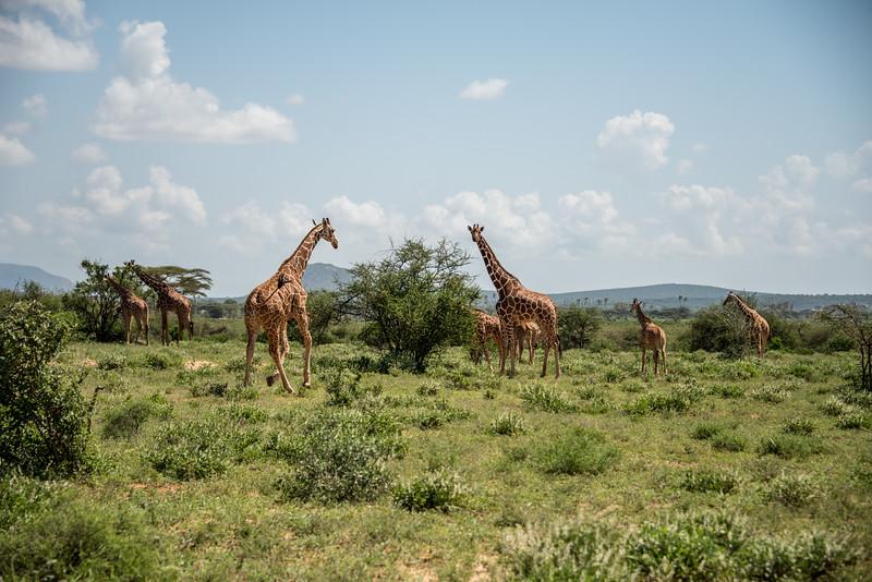 Samburu (67 of 70).jpg