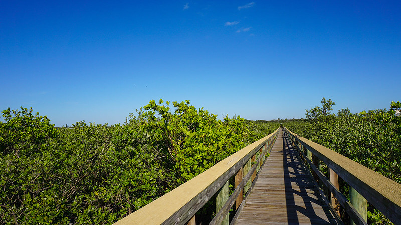 Long boardwalk stretching to horizon with mangroves on both sides