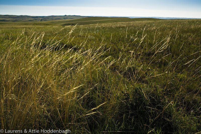 Grassland in Theodor Roosevelt NP, North Unit, ND  Filename: CEM009455-TRNP-ND-USA.jpg