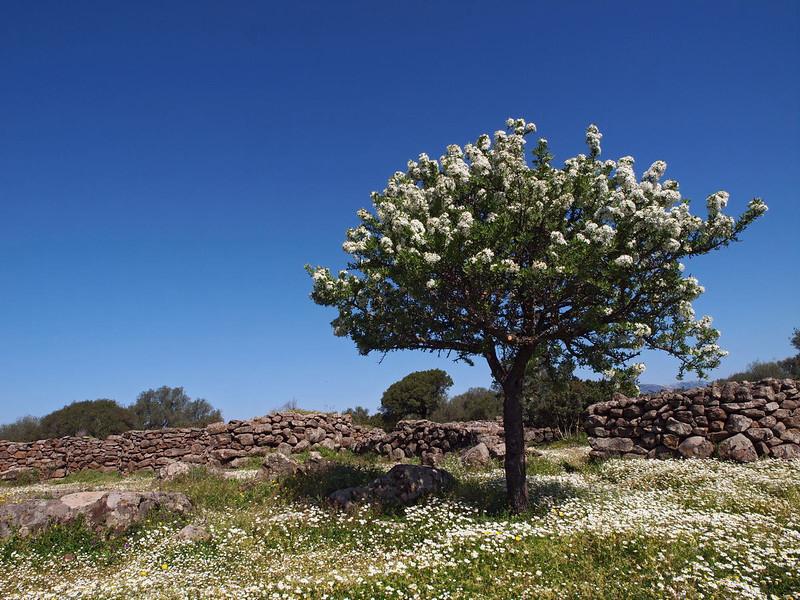 Serra e Orrios 12-04-13 (19).jpg