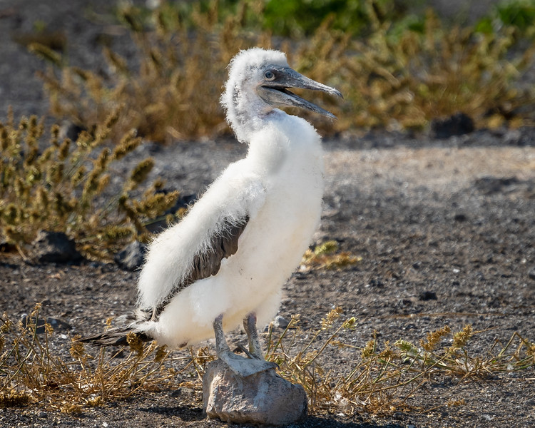 Galapagos-4032-2.jpg