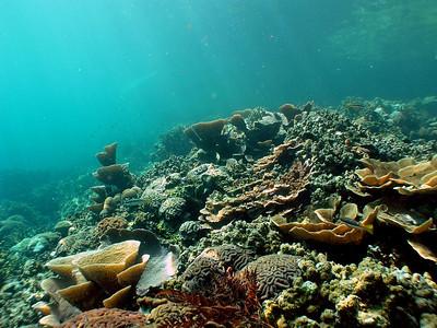 Nikko Bay (PICRC Monitoring Site 22) - 2/22/10