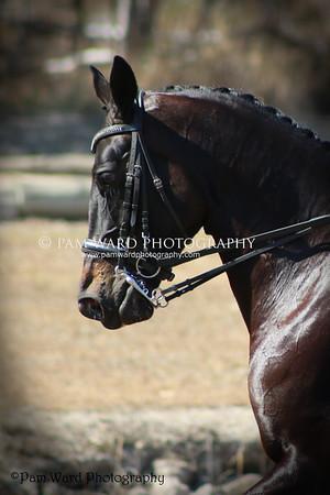Gladstone Calliope Equestrian Group 2015 Championship Comp