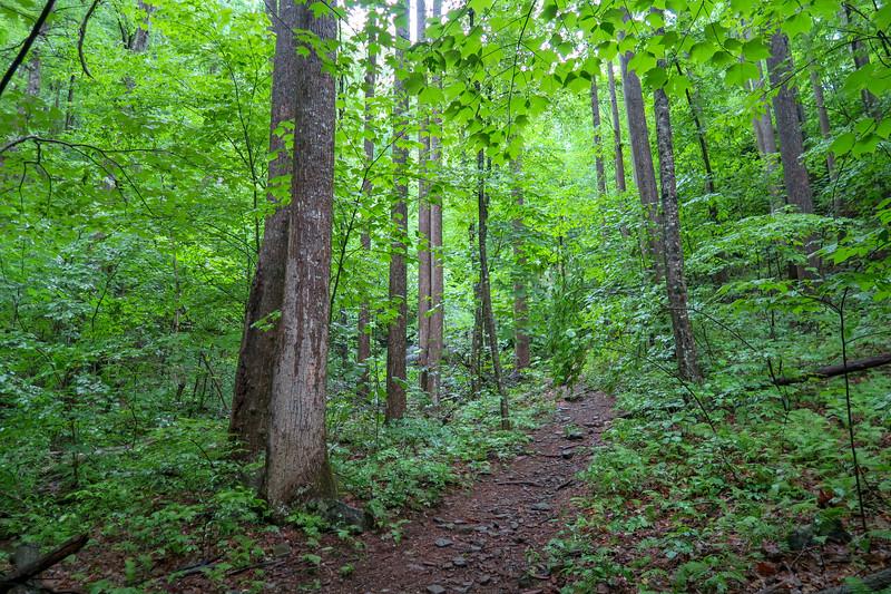 Barnett Branch Trail @ Lower Waterfall -- 3,460'