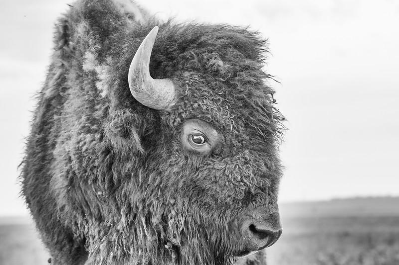 Tallgrass Prairie A7III-20190502-0001-Edit.jpg