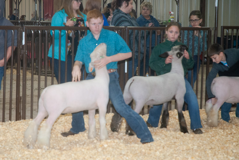 kay_county_showdown_sheep_20191207-105.jpg