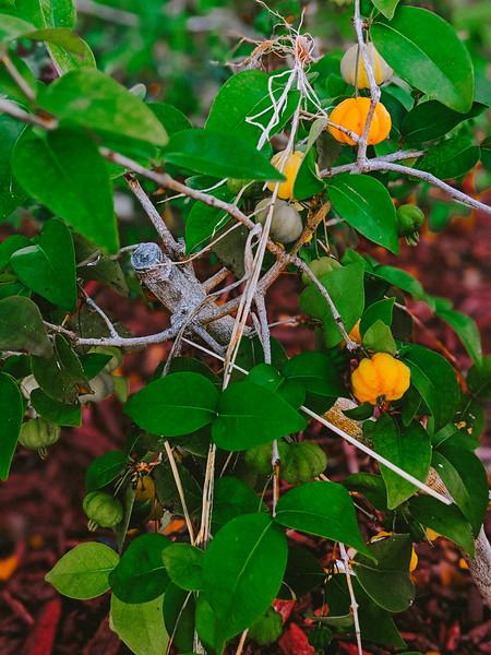 anguilla cuisinart peppers.jpg