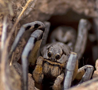 For Sale, Spider images in Spain