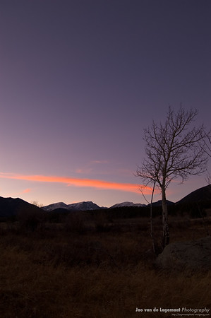 Aspen tree in Rocky Mountain National Park at sunset