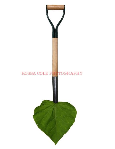 Leafy Shovel #2.sm.jpg