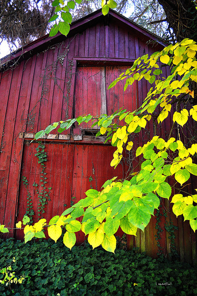 barn doors 10-15-2013.jpg