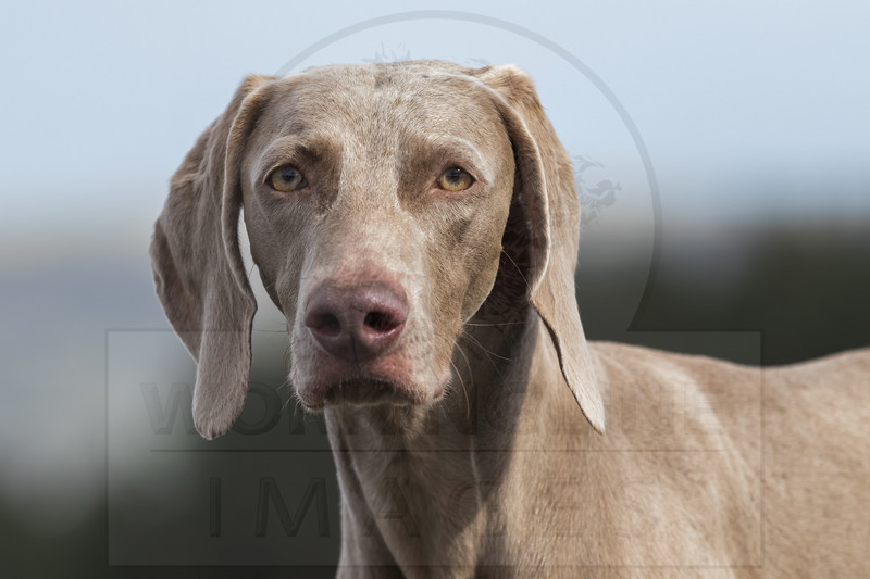 PRE 2017 CLIENT DOGS & HORSES GALLERIES
