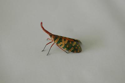 2006-05 bug's life