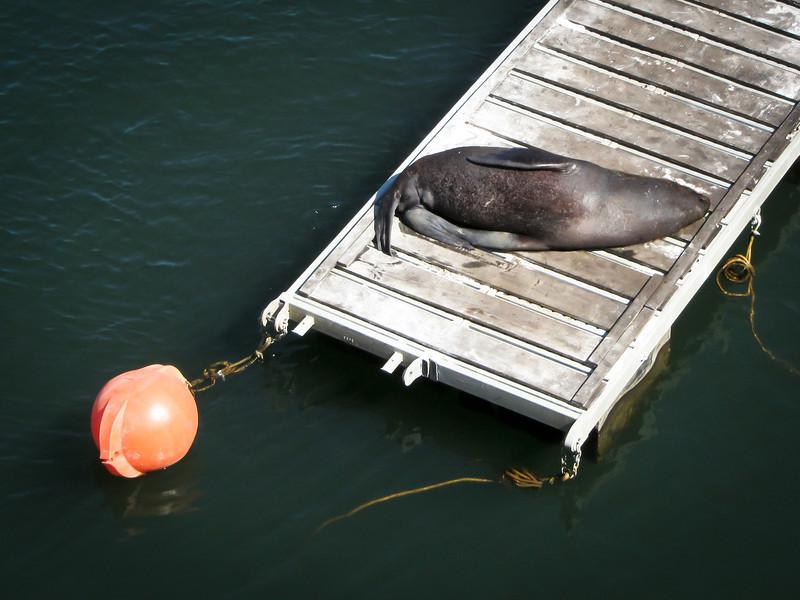 Valdivia 201201 (34).jpg