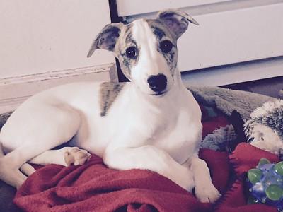 Daisy 13 weeks