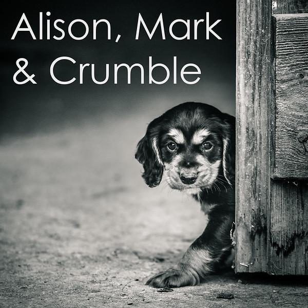 Crumble-Icons.jpg