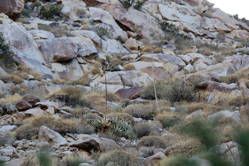 05 Cougar Canyon (148).JPG