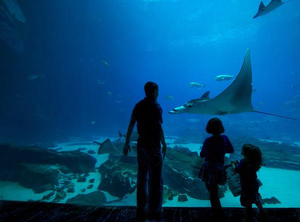 Georgia Aquarium and Millenium Park,  Atlanta