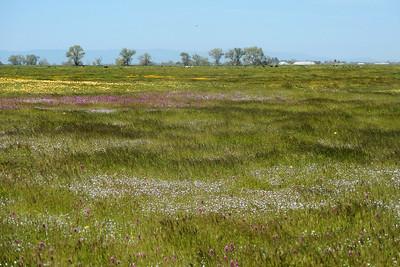 Arena Plains Wildflower Day (Nikon Photos)