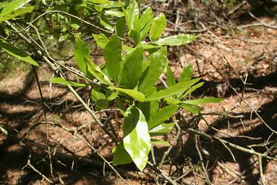 K.E.E.P. Preserve Odd Oak