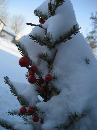 Minnesota - January 07