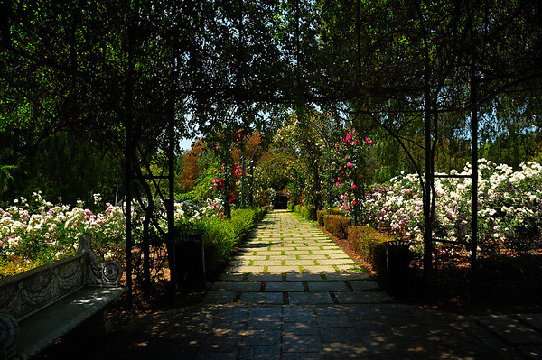 TH-Rose Garden