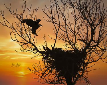 Birds of Waco
