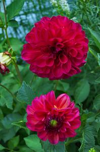 Heather's Gardens