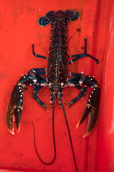 lobster-safari-wales-8.jpg