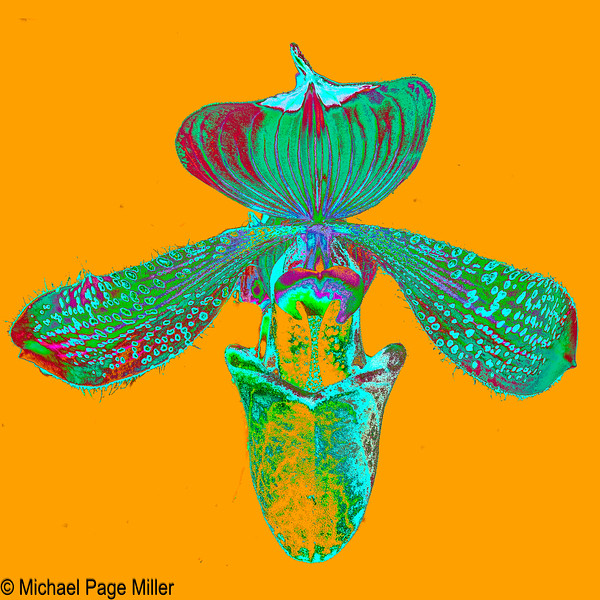 Orchid A 17-11-14-2-Edit.jpg