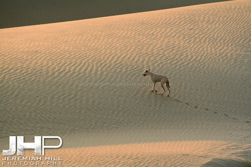 """Long Lost"", Thar Desert, Rajasthan, India, 2007 Print IND3926-266"